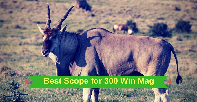 Best Scope for 300 Win Mag