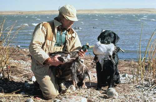 Duck hunter with lab & 3 mallards